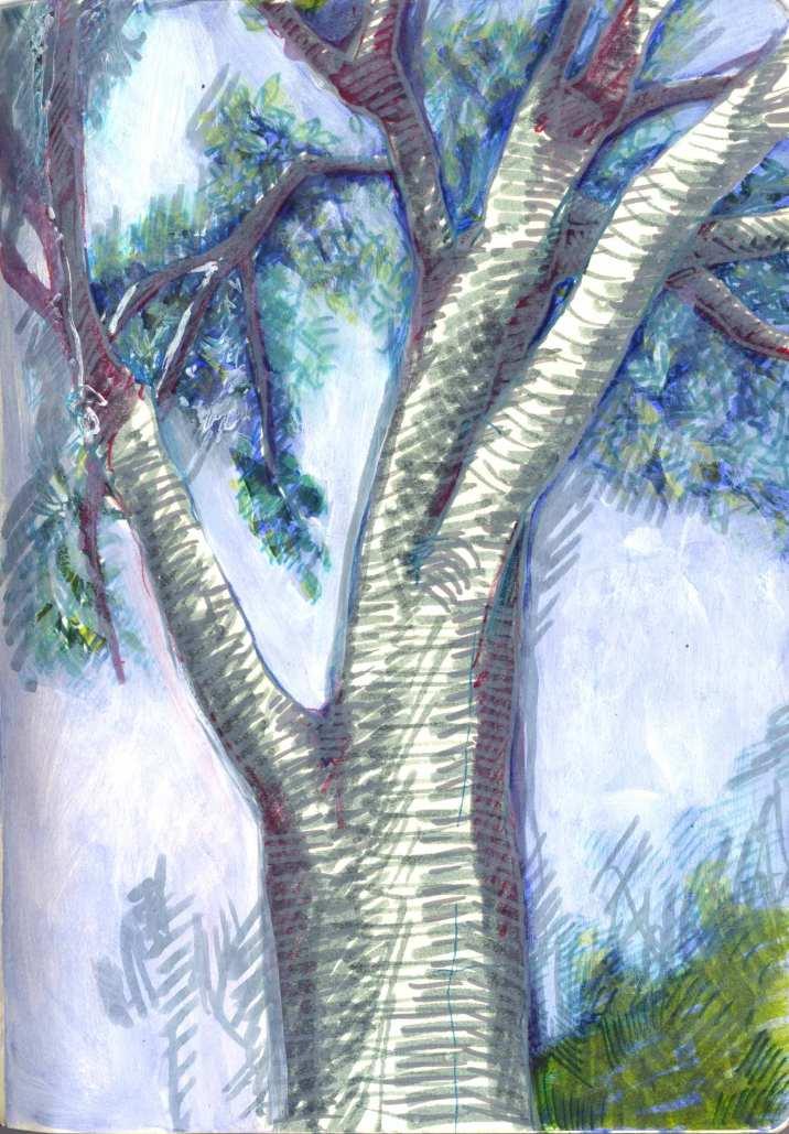 arbres007