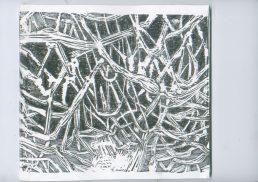 mangrove10
